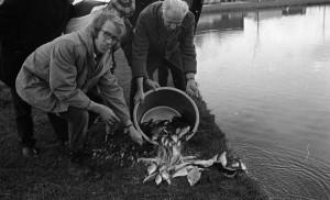 B3127 - Uitzetten van vis